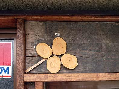 玄関上にできた四つ葉のクローバー