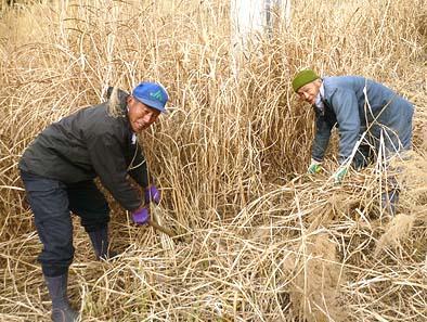 頼もしい助っ人の霜村今朝直(左)さんと霜村敬夫さん、昔芦川で茅葺き屋根が葺かれていたころよくお手伝いをされたそうです