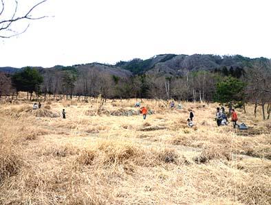 茅場は広くて気持ちの良い場所、たまに鹿が原を横切ります
