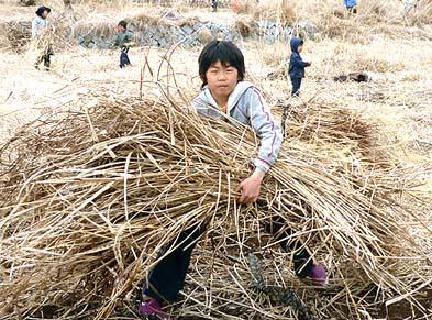 都会の子供は自然が大好き!とても良く働きました