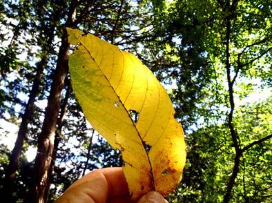 木漏れ日を浴びて、色付いた落ち葉が美しく輝いた