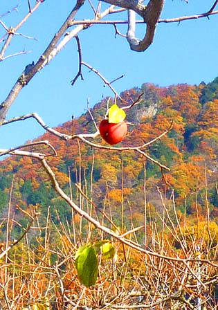 OZO写真館「野鳥の分け前」