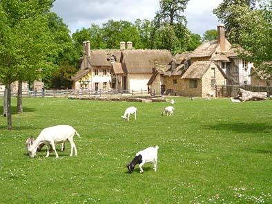 ヤギが草を食む農場と民家。