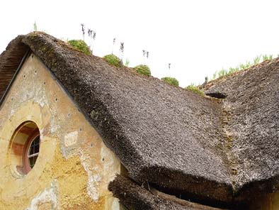 建物の屋根は主に茅葺き屋根。芝棟の花が愛らしい。
