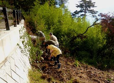 コンクリートの擁壁に沿って作業開始。