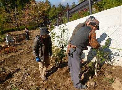 最後に杭と竹で苗の補強をして完成。