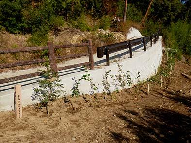 ツバキやマンサクなど約30本の苗木を植えました。