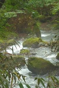 薄靄(うすもや)漂う緑の渓谷