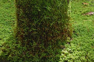 地面も木の幹も区別ない苔のジュウタン