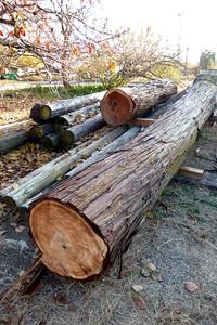 2本の大木はこの後、樹皮をむかれ向嶽寺の用材として保存格納される