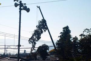 伐倒され吊り上げられた大木