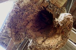 柱脚の腐朽の様子