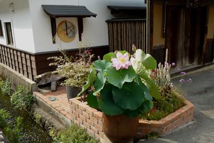 7月15日 棟梁の家の前庭に咲き誇る水蓮の花