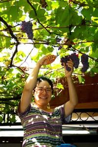 8月31日 葡萄を収穫しました