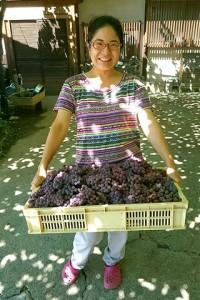 舞子さんの作業所で干し葡萄を作ります