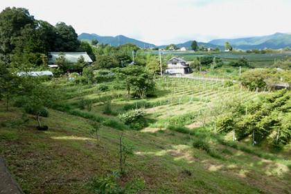なだらかに南傾斜する農場の景観