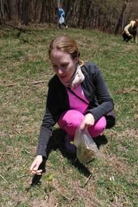 牧草地にはワラビがいっぱいでした